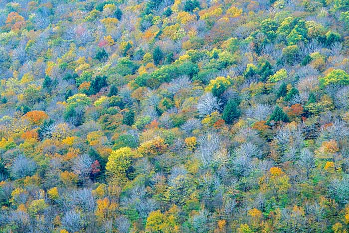 Autumn, Allegheny National Forest, Pennsylvania # 8128