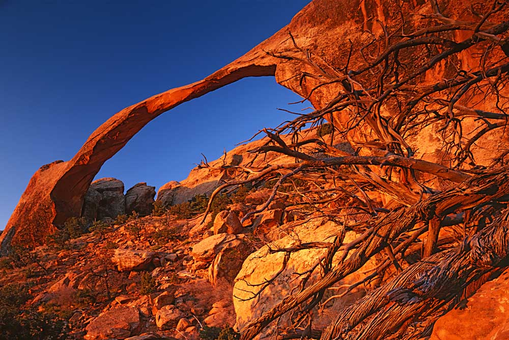 Landscape Arch, Arches National Park, Utah # 3165