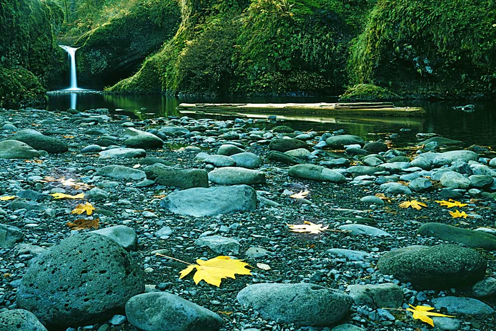 Punch Bowl Falls, Columbia Gorge National Scenic Area, Oregon # 5003