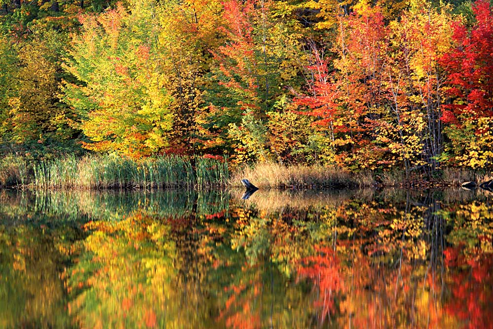 Pond, Green Mountain National Forest, Vermont # 8030