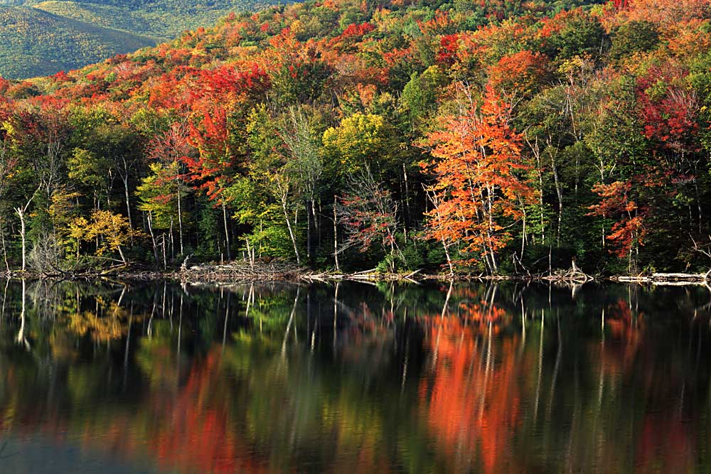 Autumn, Heart Lake, New York # 8177