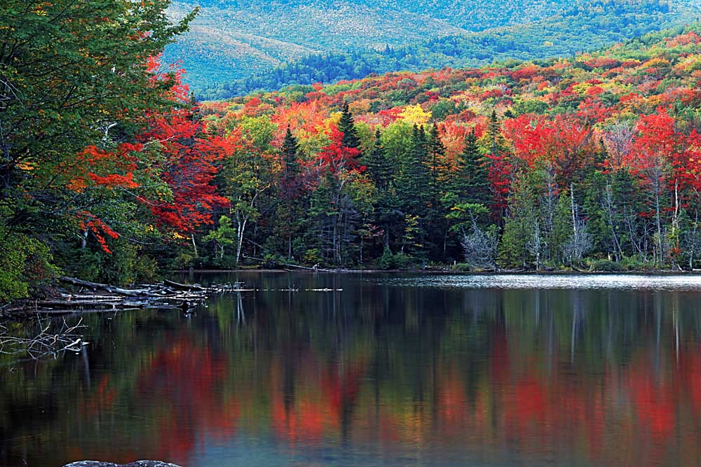Shoreline of Heart Lake, Adirondack Park and Preserve, New York # 8179