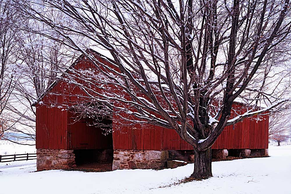 Barn and Maple after winter storm, Fairfax County, Virginia # 9035h