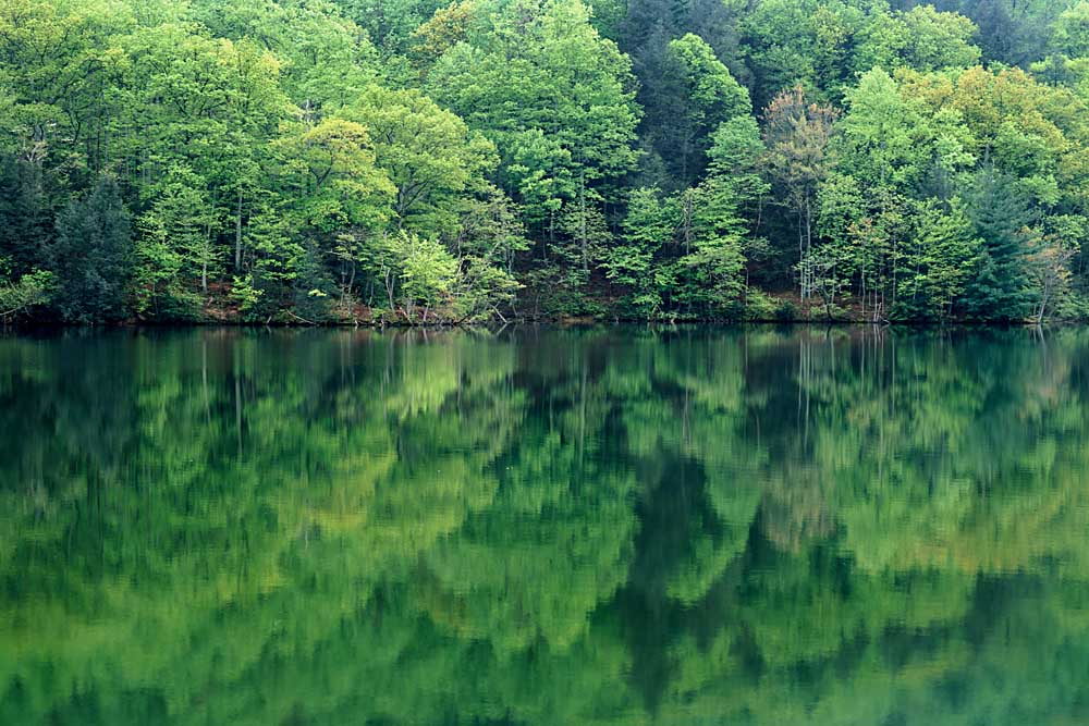 Reflections in Charlottesville Lake, Blue Ridge Mountains, Virginia # 9639h
