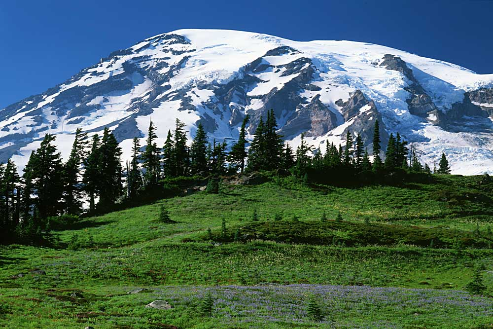 Mt. Rainier from Paradise, Mt. Rainier National Park, Washington # 1763