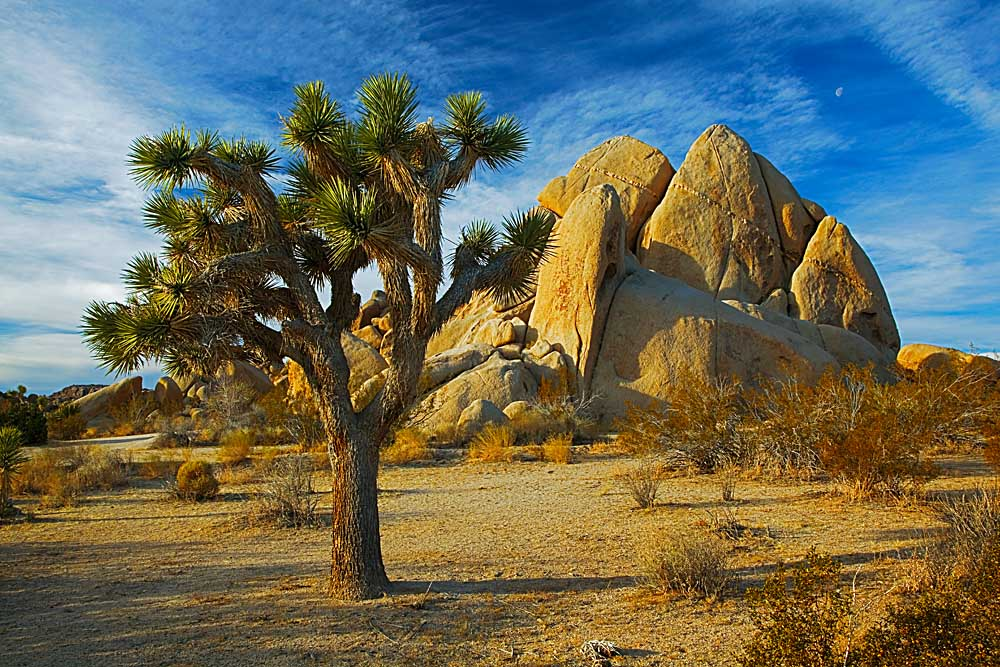 Jumbo Rocks, Joshua Tree National Park, California # 5479
