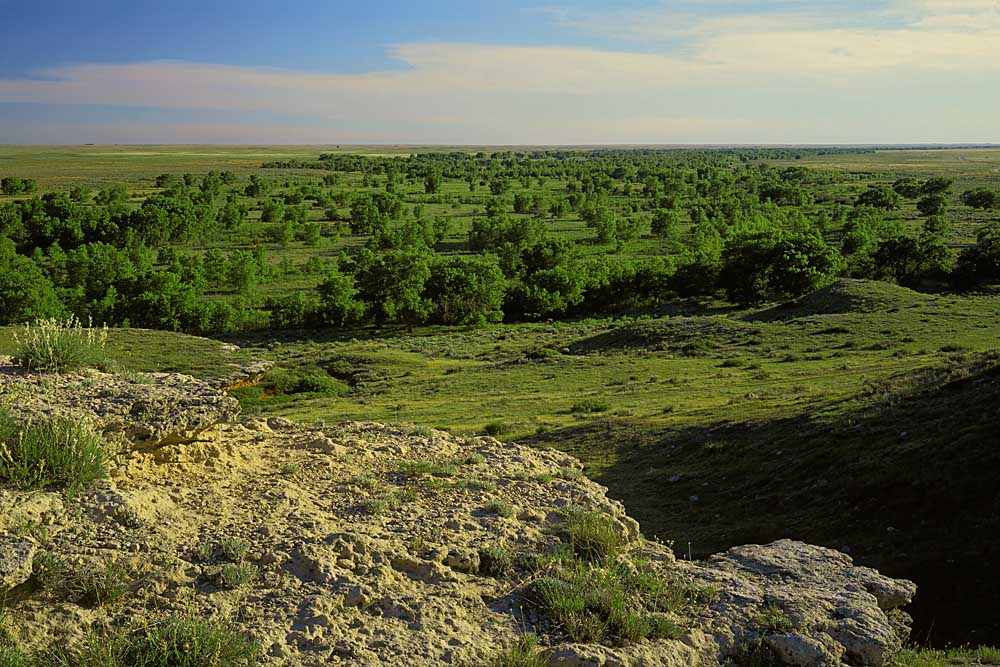 The Cimarron River Valley, Cimarron National Grassland, Kansas # 6408
