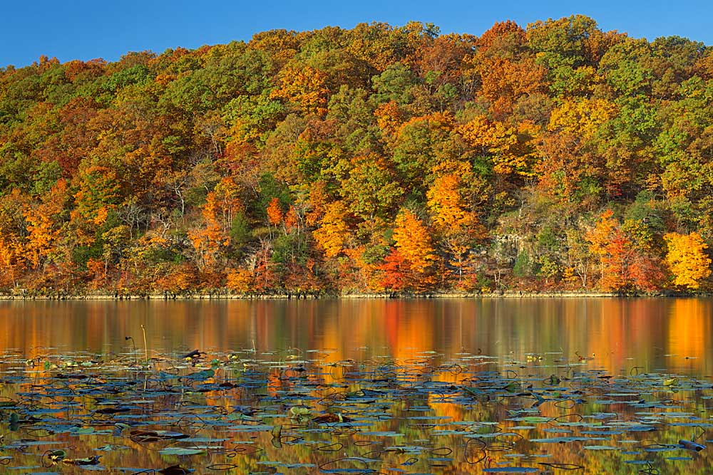 Autumn on Lake of the Ozarks, Lake of the Ozarks State Park, Missouri # 7366