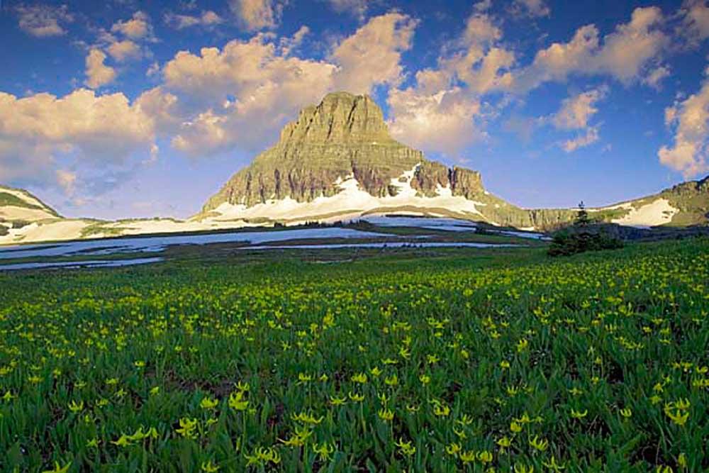 Hanging Gardens, Logan Pass, Glacier National Park, Montana # 8215b