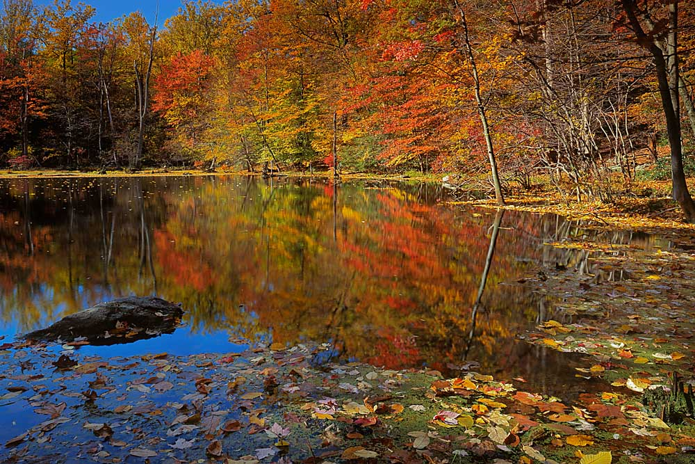 Putnam County, Autumn Pond, Adirondack Mountains, New York # 8221