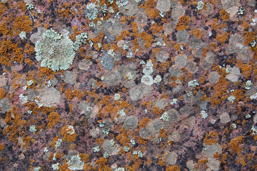 Lichen, stone, White River National Forest, Colorado, #4872